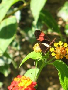... e borboletas!