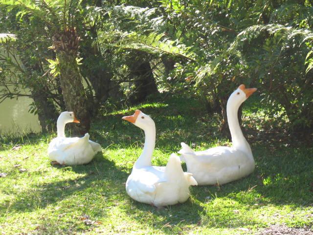 Lago Negro - Gramado - por Cleide Sousa
