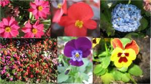 Flores da Serra Gaúcha