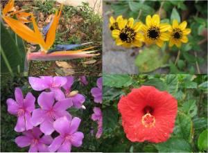 Flores da Serra do Cipó