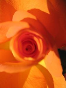 Rosa amarela - por Cleide Sousa