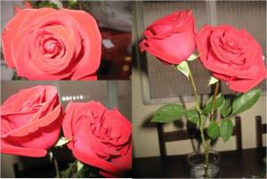 Rosas vermelhas - por Cleide Sousa