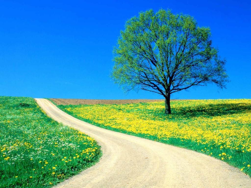 A felicidade está em admirar a beleza da flor e não somente ver o espinho.